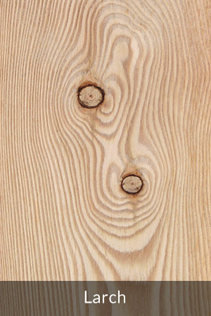Larch Sample